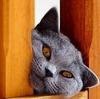 Peek a Boo ~ ~ ~