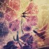 Splindid petals