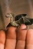 A Little Pet Dragon with Love