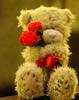 ✖a teddy for u ✖