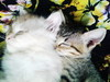 Donation for 2 evil kittens pliz