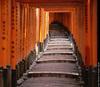 A Stroll Through Japan
