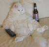 chillin with a beer