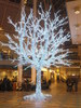 A cool glowing tree