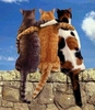 We R bEsT oF fRienDS!Meow!