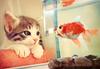 hey fish