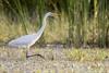 no egrets