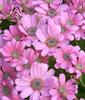 Happy PINK Spring to you