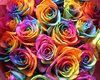 Roses as colorful as you are ✿