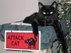A Guardian Attack Cat !