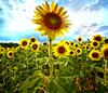 ღhappy SUNdayღ