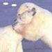 A Precious Polar Bear Hug